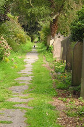 View along York Cemetery path - with cat